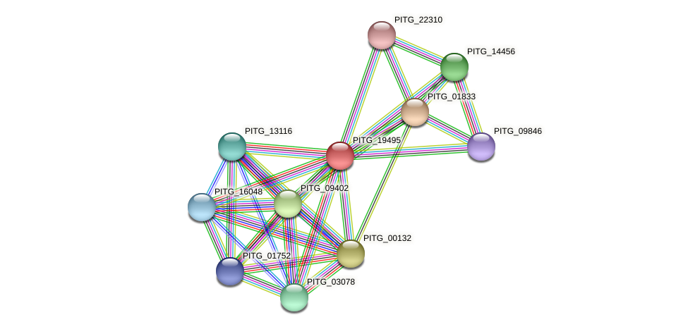 PITG_19495 protein (Phytophthora infestans) - STRING interaction network