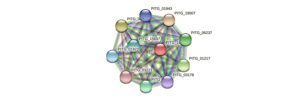PITG_19531 protein (Phytophthora infestans) - STRING interaction network