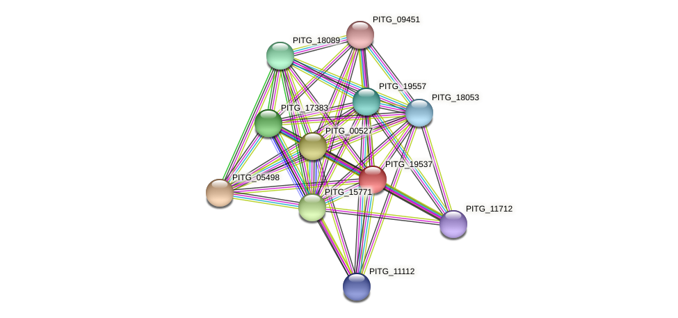 PITG_19537 protein (Phytophthora infestans) - STRING interaction network