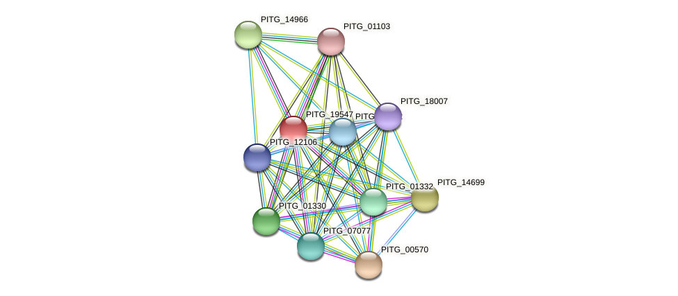 PITG_19547 protein (Phytophthora infestans) - STRING interaction network