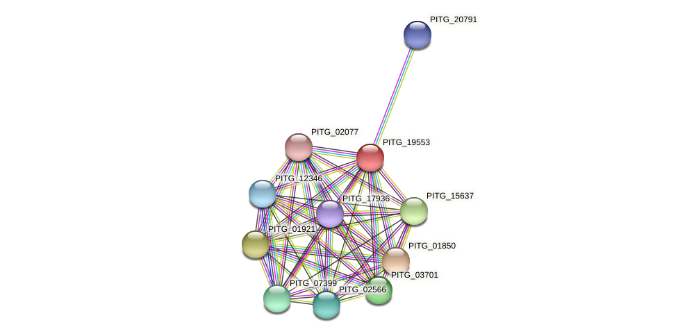 PITG_19553 protein (Phytophthora infestans) - STRING interaction network