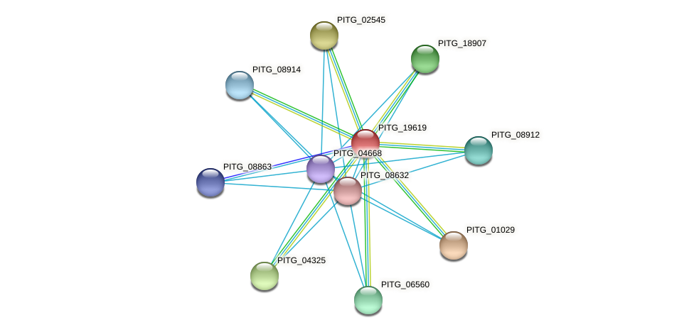 PITG_19619 protein (Phytophthora infestans) - STRING interaction network