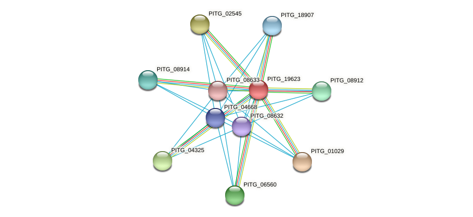 PITG_19623 protein (Phytophthora infestans) - STRING interaction network
