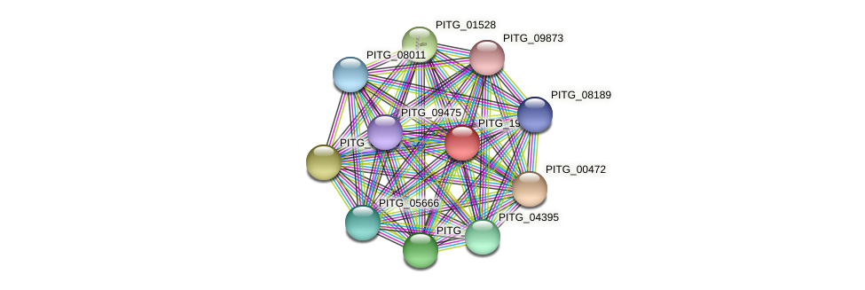 PITG_19646 protein (Phytophthora infestans) - STRING interaction network