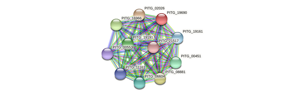 PITG_19690 protein (Phytophthora infestans) - STRING interaction network
