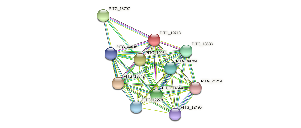 PITG_19718 protein (Phytophthora infestans) - STRING interaction network