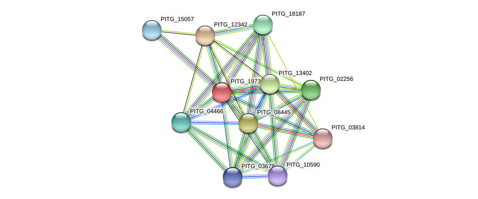 PITG_19737 protein (Phytophthora infestans) - STRING interaction network