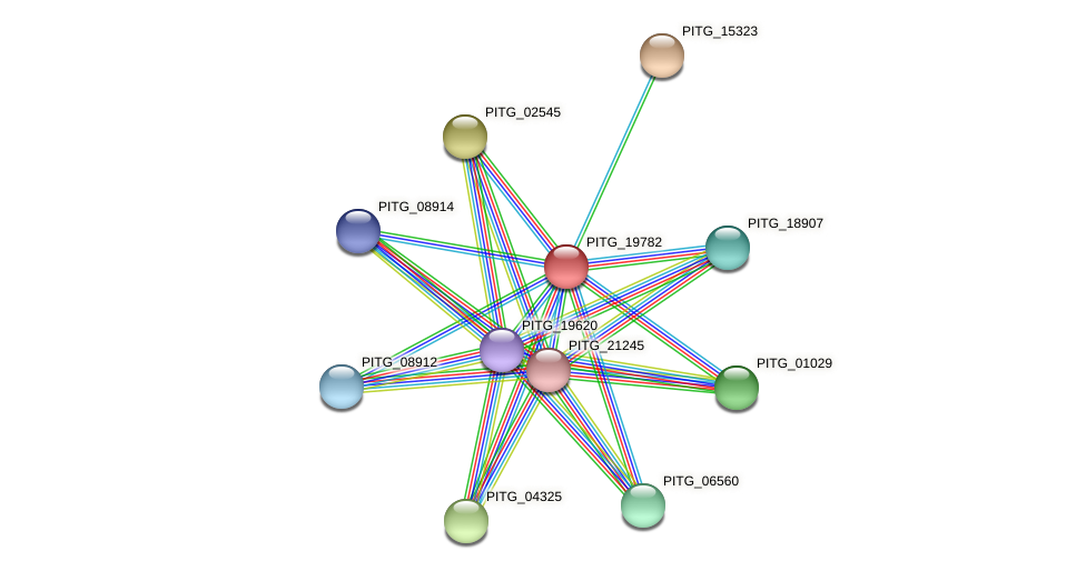 PITG_19782 protein (Phytophthora infestans) - STRING interaction network