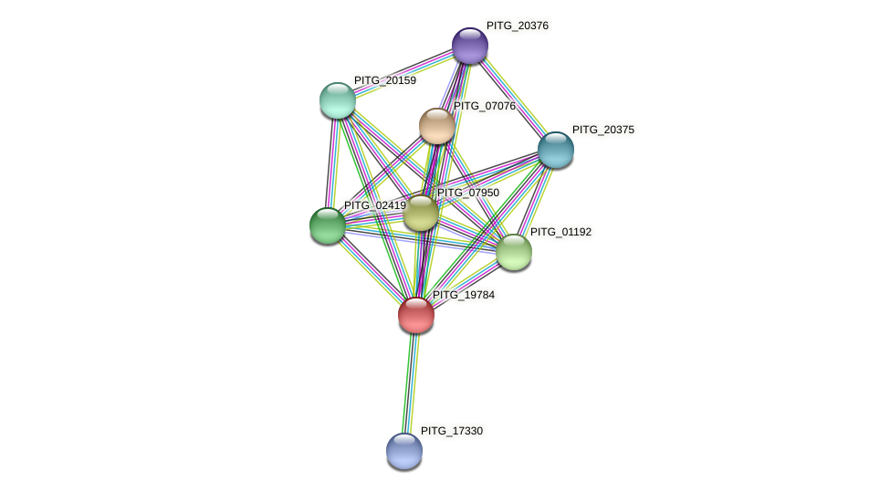 PITG_19784 protein (Phytophthora infestans) - STRING interaction network