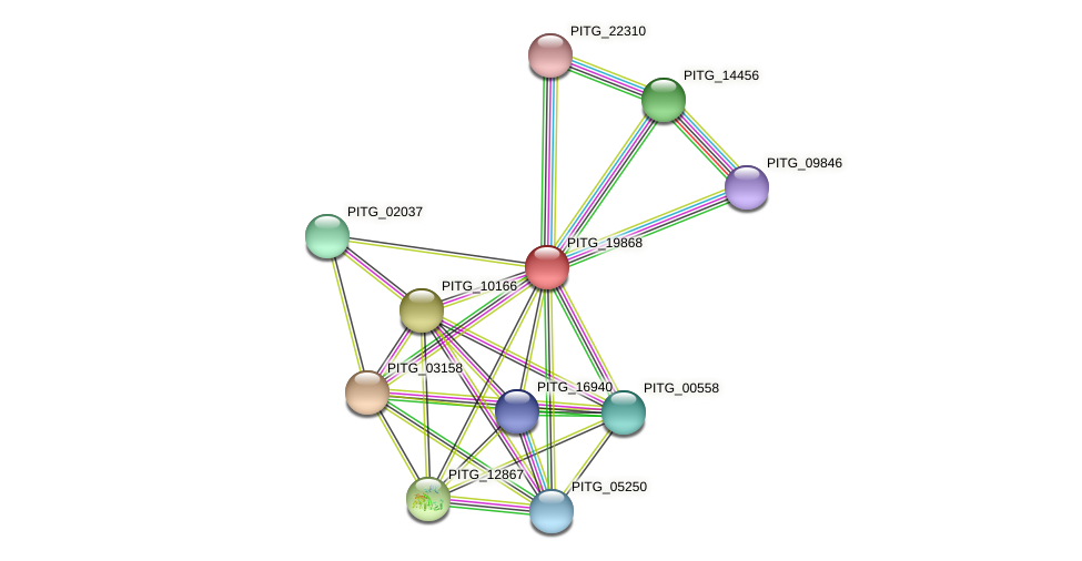 PITG_19868 protein (Phytophthora infestans) - STRING interaction network