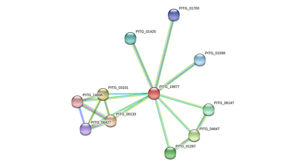 PITG_19977 protein (Phytophthora infestans) - STRING interaction network