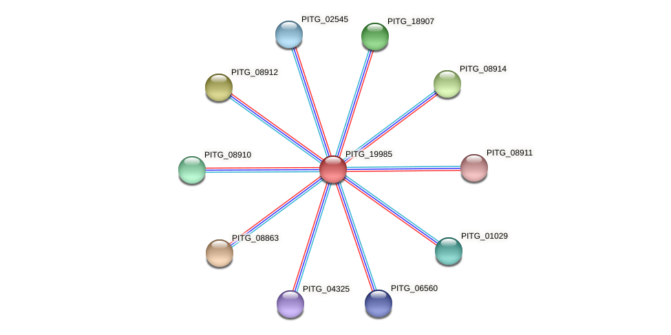 PITG_19985 protein (Phytophthora infestans) - STRING interaction network