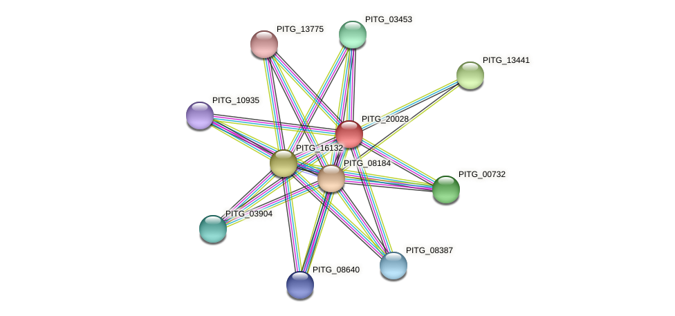 PITG_20028 protein (Phytophthora infestans) - STRING interaction network
