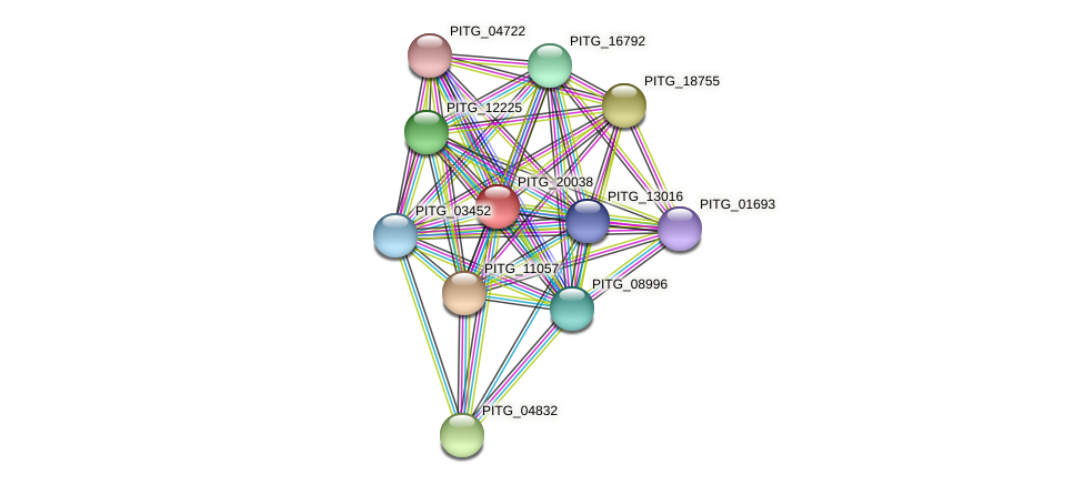 PITG_20038 protein (Phytophthora infestans) - STRING interaction network