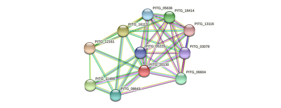PITG_20130 protein (Phytophthora infestans) - STRING interaction network