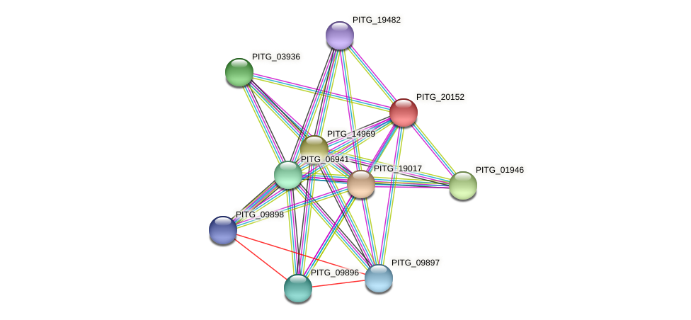 PITG_20152 protein (Phytophthora infestans) - STRING interaction network