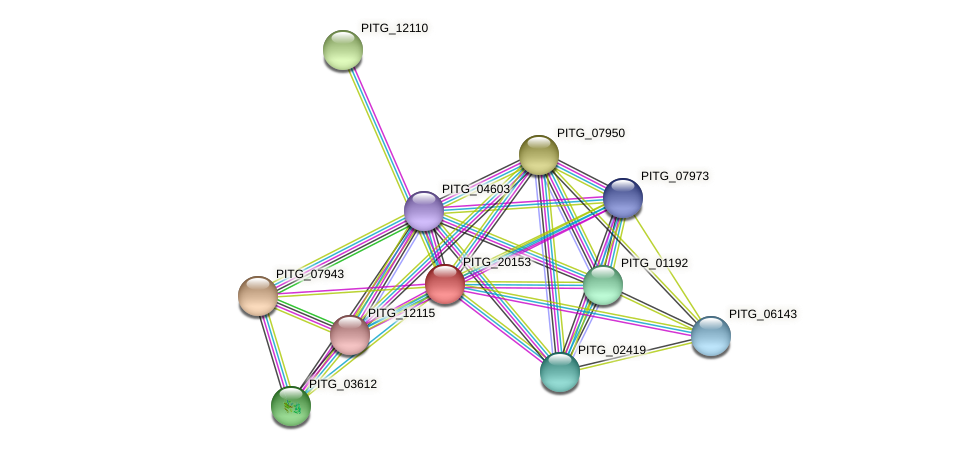 PITG_20153 protein (Phytophthora infestans) - STRING interaction network