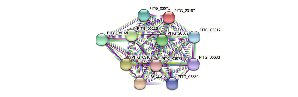 PITG_20197 protein (Phytophthora infestans) - STRING interaction network