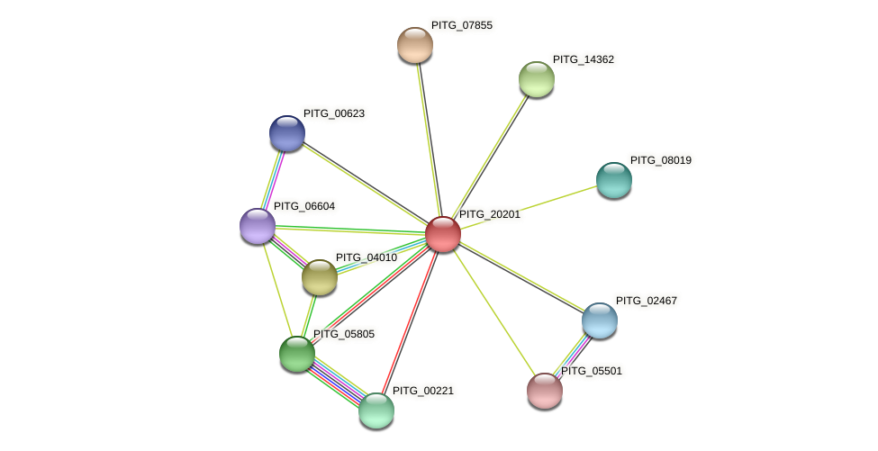 PITG_20201 protein (Phytophthora infestans) - STRING interaction network