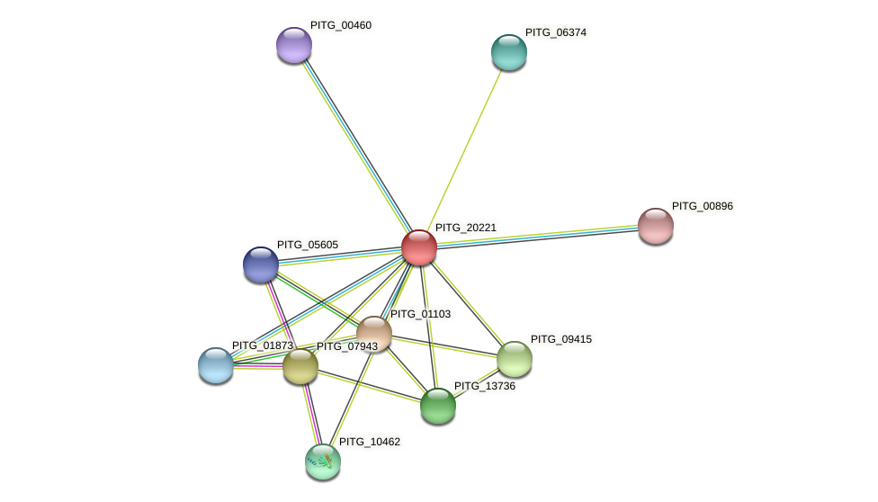 PITG_20221 protein (Phytophthora infestans) - STRING interaction network