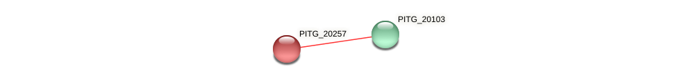 PITG_20257 protein (Phytophthora infestans) - STRING interaction network