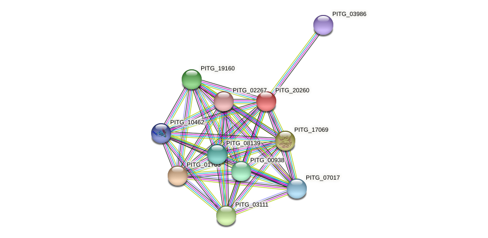 PITG_20260 protein (Phytophthora infestans) - STRING interaction network