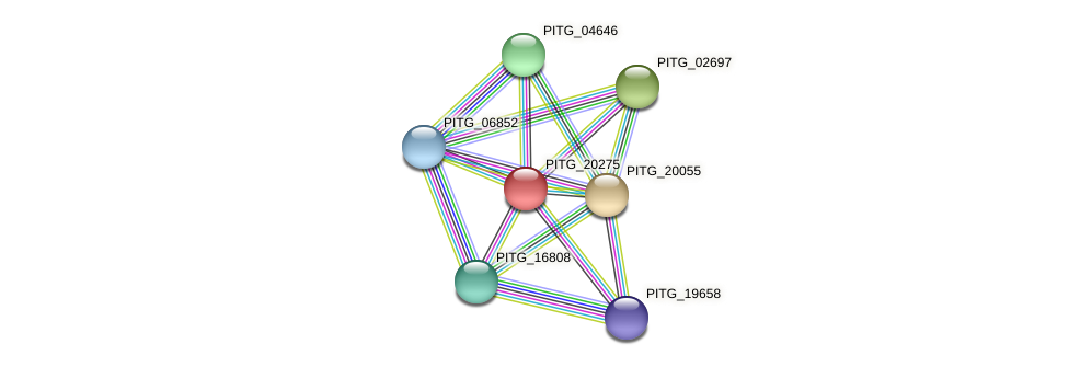 PITG_20275 protein (Phytophthora infestans) - STRING interaction network