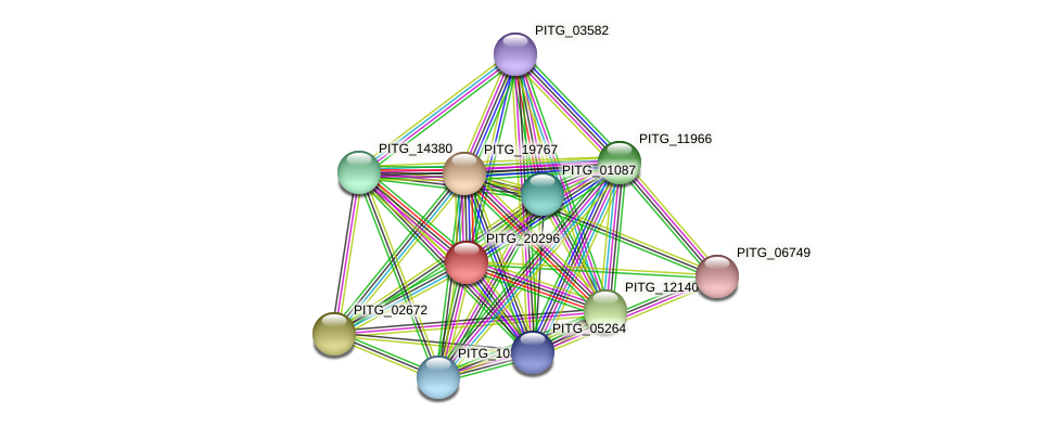 PITG_20296 protein (Phytophthora infestans) - STRING interaction network
