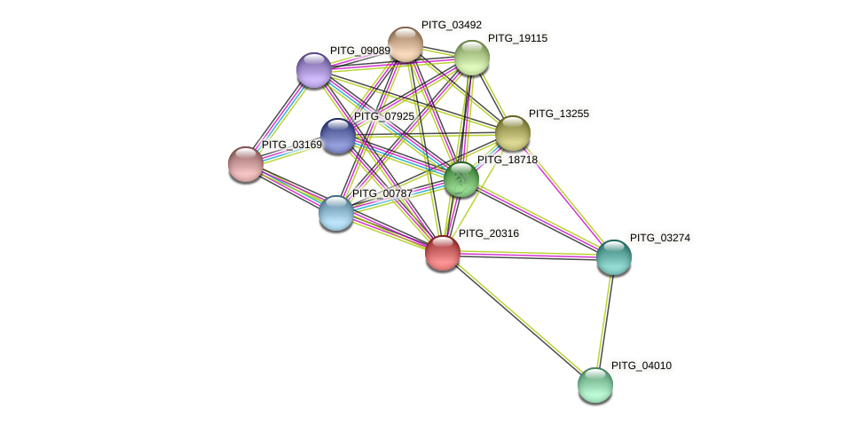 PITG_20316 protein (Phytophthora infestans) - STRING interaction network