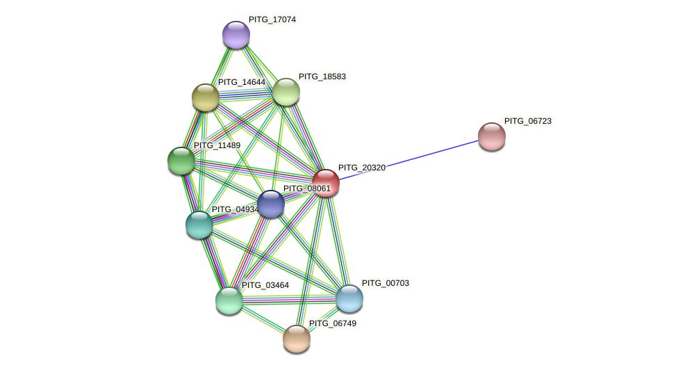 PITG_20320 protein (Phytophthora infestans) - STRING interaction network