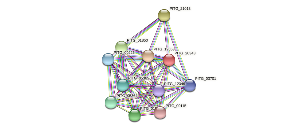 PITG_20348 protein (Phytophthora infestans) - STRING interaction network
