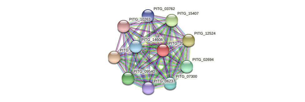 PITG_20376 protein (Phytophthora infestans) - STRING interaction network