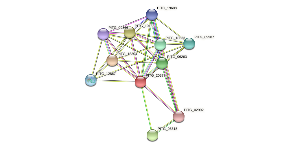 PITG_20377 protein (Phytophthora infestans) - STRING interaction network