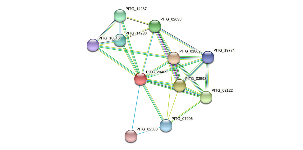 PITG_20465 protein (Phytophthora infestans) - STRING interaction network
