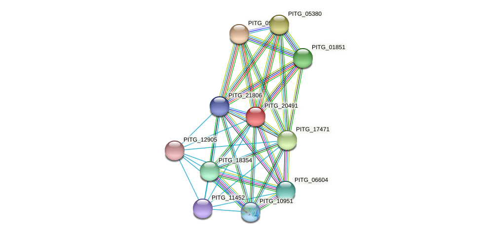 PITG_20491 protein (Phytophthora infestans) - STRING interaction network