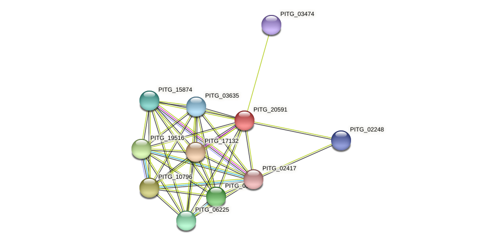 PITG_20591 protein (Phytophthora infestans) - STRING interaction network