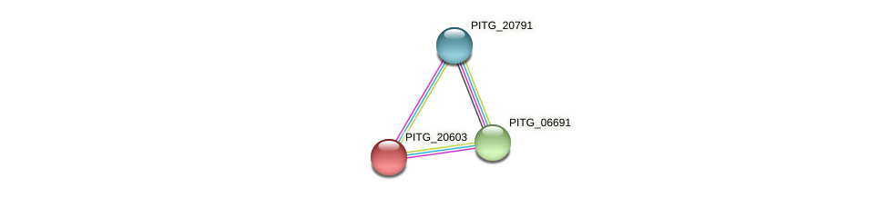 PITG_20603 protein (Phytophthora infestans) - STRING interaction network