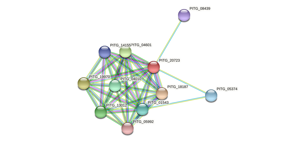 PITG_20723 protein (Phytophthora infestans) - STRING interaction network