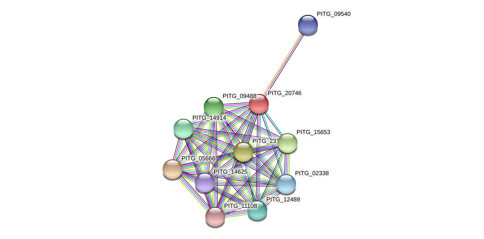 PITG_20746 protein (Phytophthora infestans) - STRING interaction network