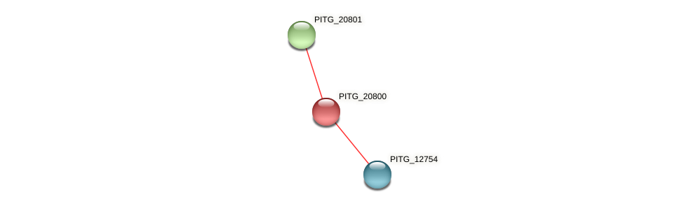 PITG_20800 protein (Phytophthora infestans) - STRING interaction network