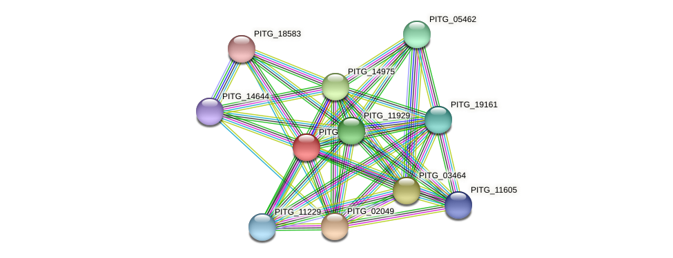 PITG_20825 protein (Phytophthora infestans) - STRING interaction network