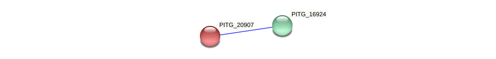 PITG_20907 protein (Phytophthora infestans) - STRING interaction network