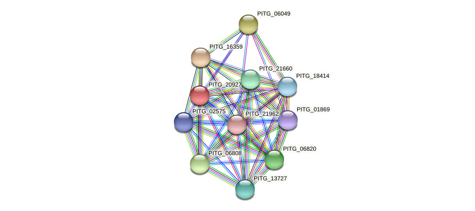 PITG_20927 protein (Phytophthora infestans) - STRING interaction network