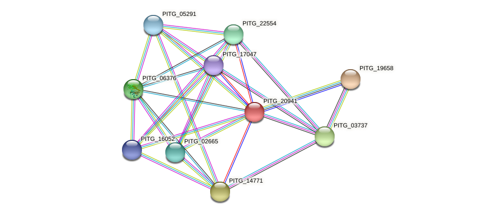PITG_20941 protein (Phytophthora infestans) - STRING interaction network