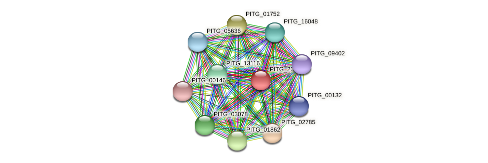 PITG_20970 protein (Phytophthora infestans) - STRING interaction network