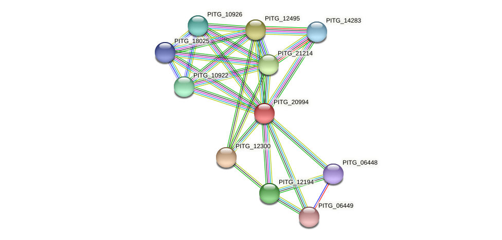 PITG_20994 protein (Phytophthora infestans) - STRING interaction network