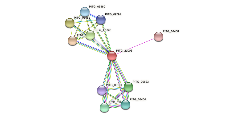 PITG_21006 protein (Phytophthora infestans) - STRING interaction network