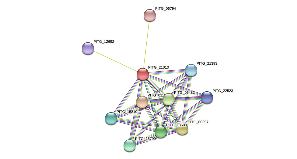 PITG_21010 protein (Phytophthora infestans) - STRING interaction network