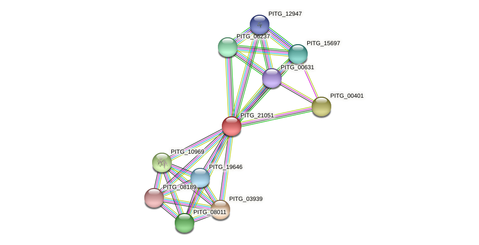 PITG_21051 protein (Phytophthora infestans) - STRING interaction network