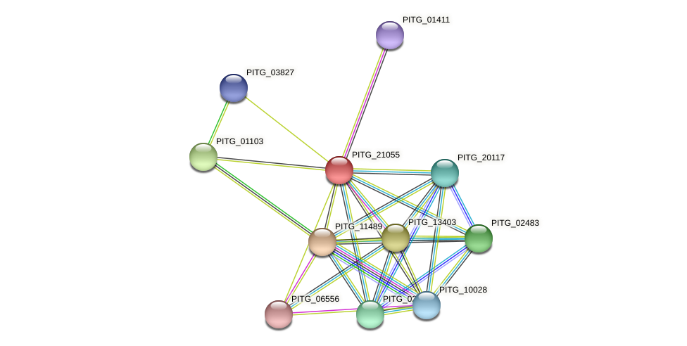 PITG_21055 protein (Phytophthora infestans) - STRING interaction network